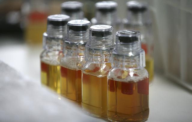 ТАСС: Эксперты WADA не испытывают трудностей и проблем при работе в московской лаборатории