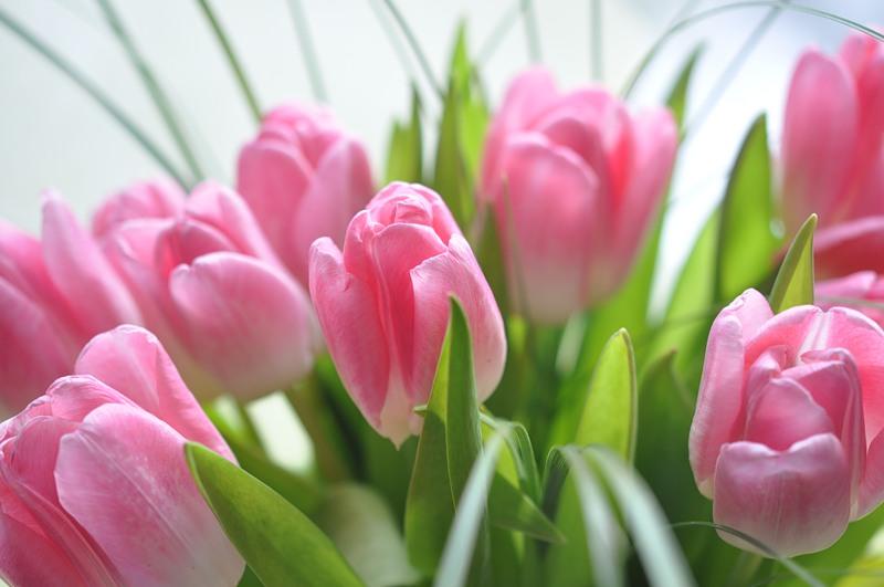 Поздравление Президента ПКР В.П.Лукина в связи с празднованием Международного женского дня