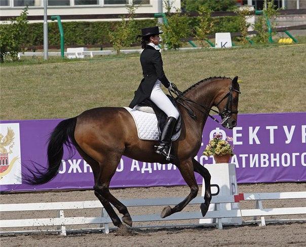 В г. Санкт-Петербурге стартовал чемпионат России по конному спорту, проводимый Федерацией спорта лиц с ПОДА